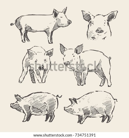 Hand drawn vector illustrations of little piglets