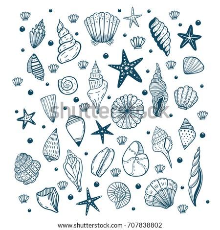 Hand drawn vector illustrations of seashells. Marine background.