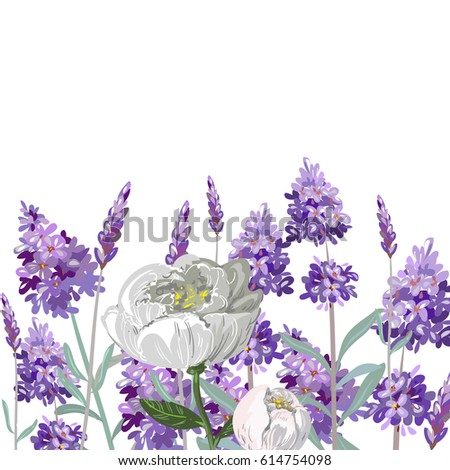 hand drawn vector lavender and