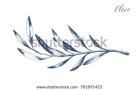hand drawn vector olive branch