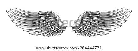 hand drawn vector open wings in ...