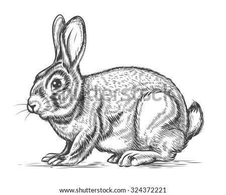 Hand drawn vector rabbit in engraving style. Bunny and hare, vintage design sketch illustration