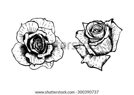 Hand drawn vector roses flower