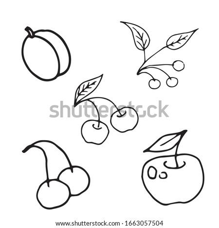 hand drawn vector set of fruits