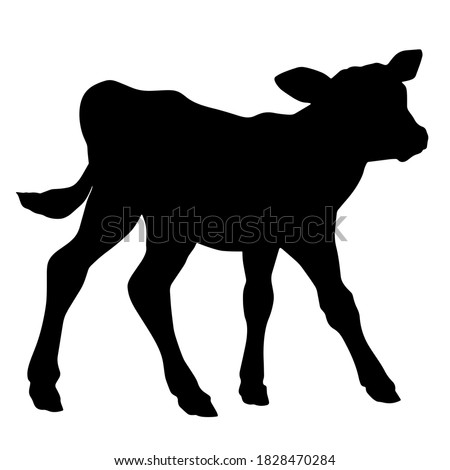 Hand drawn vector silhouette of standing calf isolated on white background. Black and white  stock illustration of baby cow.