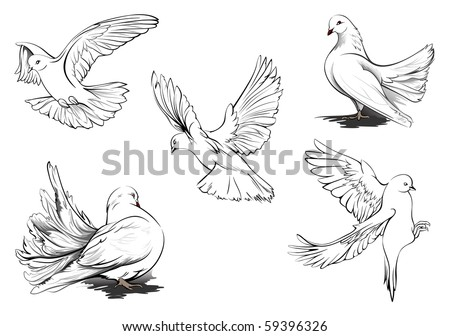 White Doves Drawings of Beautiful White Doves