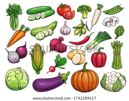 Hand drawn vector vegetables icons set. Illustration of color vegetables for design farm product, market label vegetarian shop.