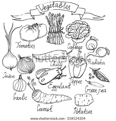 Hand drawn vector vegetables set. Sketches of asparagus, carrot, paprika, radishes, cauliflower, eggplants, onion, potatoes, tomatoes, green pea, cabbage, chili.