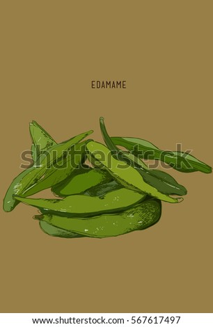 hand drawn vegetable   edamame