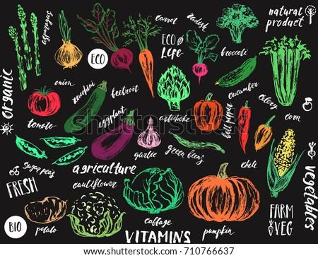 Hand drawn vegetables. Asparagus; artichoke; onion; tomato; potato; cabbage; cauliflower; garlic; pumpkin; zucchini; corn; bell pepper; beans; eggplant; celery; beet; carrot; cucumber; chili; radish #710766637