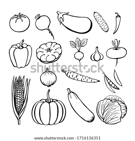 Hand drawn vegetables collection, isolated elements on the white. Vector illustration.