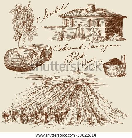 hand drawn vineyards