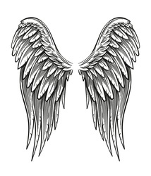 Hand drawn vintage closed wings vector illustration isolated on white.
