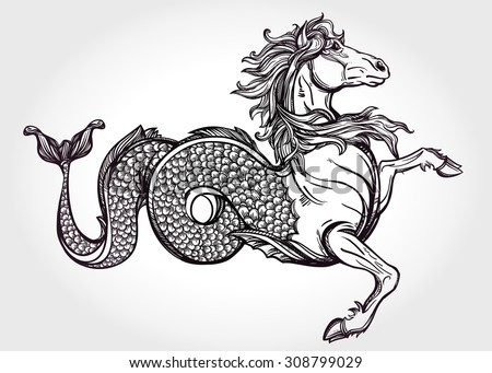 Hand drawn vintage Hippocampus or Kelpie - magic sea or water horse. Folklore motif, tattoo art. Heraldry and logo concept art. Isolated vector illustration in line art style. Mythological creature.