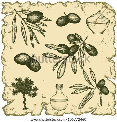 Hand drawn vintage olive set