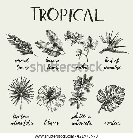 Hand drawn vintage retro sketch tropical plants set. Vector illustrations