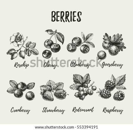 Hand drawn vintage sketch berries set. Vector illustration of eco food