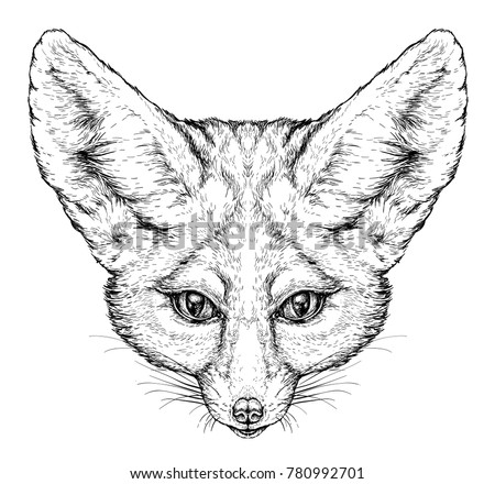 Hand drawn vintage style sketch of cute funny Fennec Fox. Vector Illustration