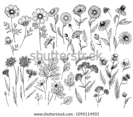 hand drawn wild hay flowers