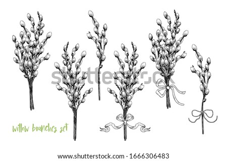 hand drawn  willow branches