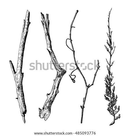 hand drawn wood twig set   ink...