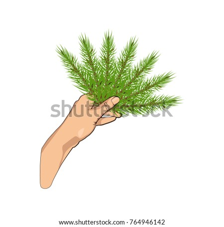 hand holds the spruce branches
