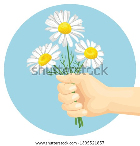 hand is holding a bouquet of daisies. Round icon, banner. Vector illustration of spring flowers in cartoon flat style. #1305521857