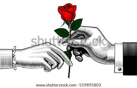 hand of man give a red rose to