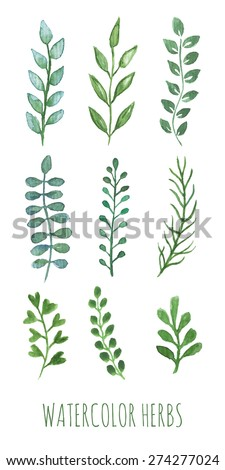 hand painted water color herbs
