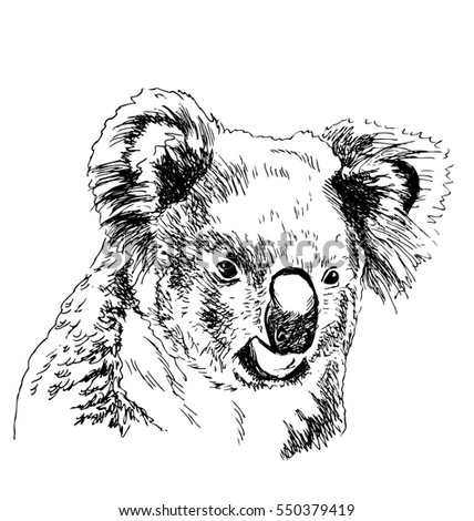 Hand sketch head koala. Vector illustration