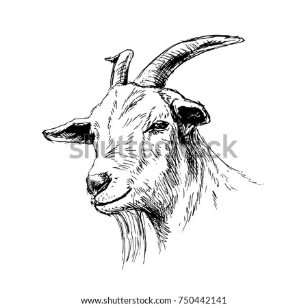 Hand sketch head of goat. Vector illustration
