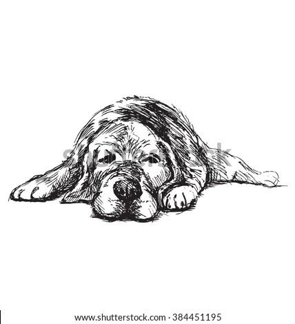 hand sketch lying dog