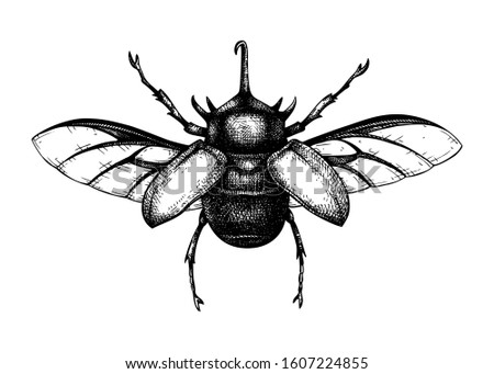 Hand sketched five-horned rhinoceros beetle. Insects collection. Isolated entomological illustration on white background. Insects drawing. Black and white rhinoceros beetle sketch. Realistic outline. stock photo