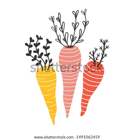 Handdrawn different color and shape colorful carrots, isolated element in scandinavian style. Sketch style red and yellow organic farm carrot, hand drawn illustration, good for sticker or print poster
