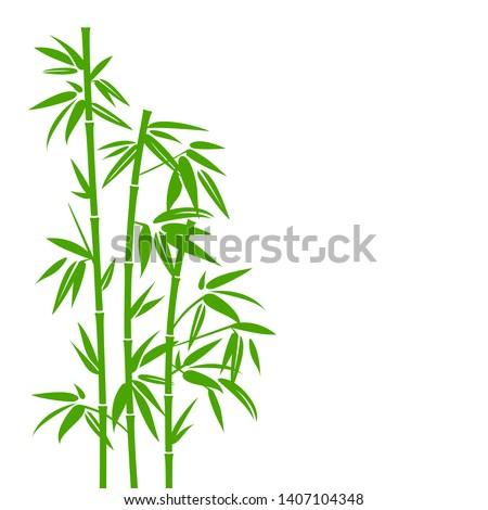 handdrawn green bamboo plant