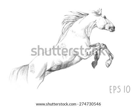handdrawn of jumping horse