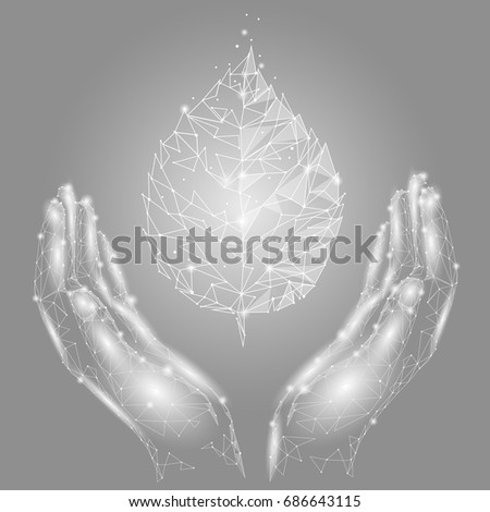 hands holding gray white leaf