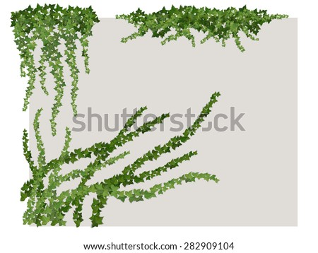 hanging branches of the vines