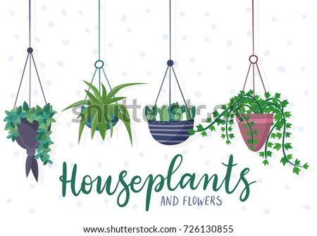 Hanging house plants and flowers in pots. Flat cartoon style vector illustration.