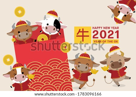Happy Chinese new year greeting card. 2021 Ox zodiac. Cute cow in red costume and gold money. Animal holidays cartoon character. Translated: Ox. -Vector