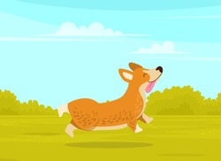 Happy cute corgi dog is walking in green summer park background. Funny ginger puppy with short paws
