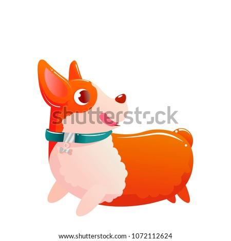 happy cute dog corgi running on