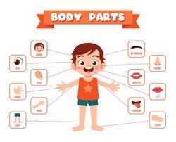 happy cute kid boy body part anatomy
