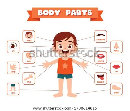 happy cute kid boy body part anatomy Foto stock ©