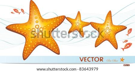 happy family of sea stars
