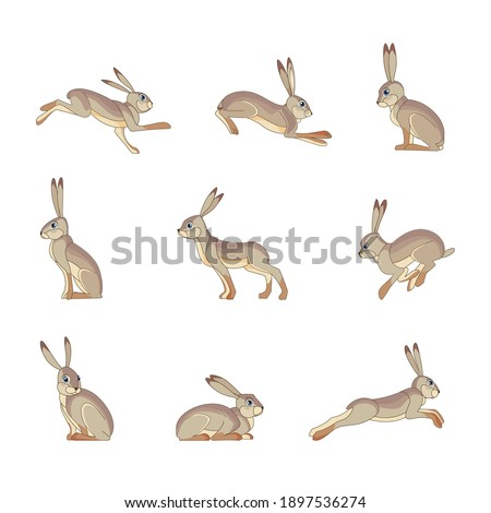 Hare wild animal set vector illustration. Funny rabbit character in various poses cartoon design. Flat style isolated on white background.