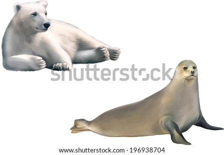 harp seal isolated on white