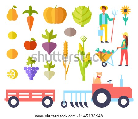 Harvest person harvesting fruits and plants. Tractor to transport production, apple and pear, pumpkin and cabbage, grapes and lemon, corn and wheat vector #1145138648