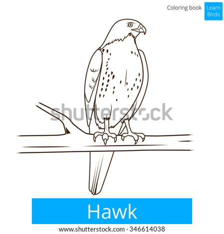 Parrot Cartoon Coloring Book Vector Illustration