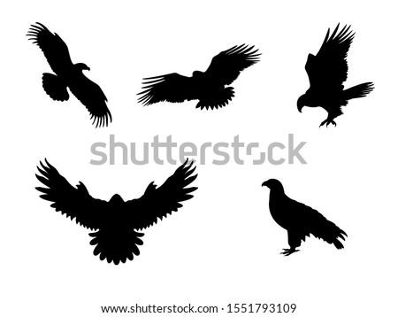 Hawk Eagle Falcon Orlan. Silhouettes predator birds. Vector illustrator Сток-фото ©